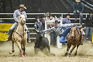 Steer wrestler Justin Dahl makes his run during slack at the Bismarck Rodeo on Saturday, Feb. 3, 2018. This photo and more from most runs are available at Bobwire-S.com.