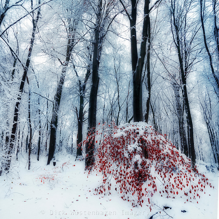 Dreamy winter scenery with a small tree with red leaves - texturized photograph<br /> Licenses:<br /> http://www.westend61.de/koala2/imgsearch.html?number=DWI000163&amp;mode=pv