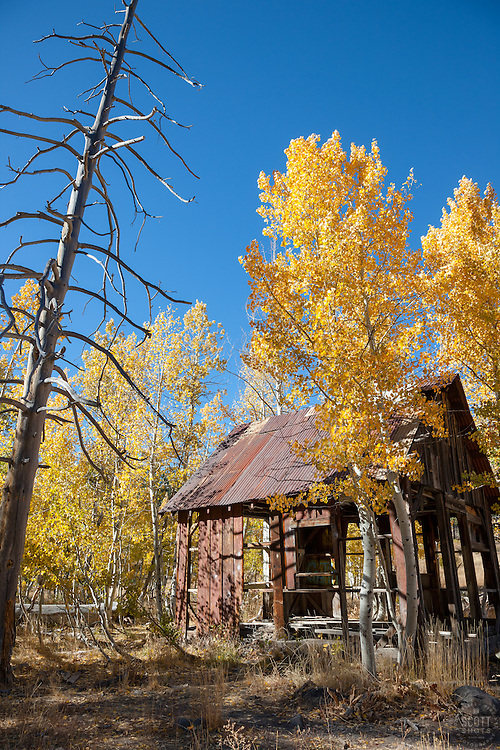 """Shack in the Aspen 2"" - This old shack and yellow aspen were photographed in the fall, near the Hwy 267 summit between Truckee and Lake Tahoe."