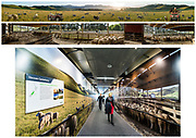 Christchurch International Airport - Canterbury Sheepfarm Airbridge Murals