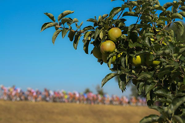 Boels Rental Ladies Tour Leerdam door de grootste fruittuin van Nederland reden de vrouwen vandaag