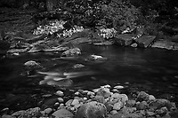 Merced River Meditation. Image taken with a Nikon D3 camera and 24-70 mm f/2.8 lens (ISO 200, 45 mm, f/11, 10 sec). Camera mounted on a tripod. Monochrome Version.