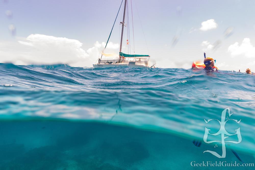 The WildQuest catamaran, DolphinQuest
