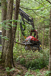 A Valmet log processor harvesting trees in the Reed Plantation in Reed, Maine.