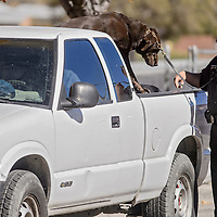 McKinley County Sheriff's lieutenant Pat Salazar uses a dog to search a truck during a stolen vehicle stop near Woodrow Avenue and Mesa Avenue in Gallup Tuesday.