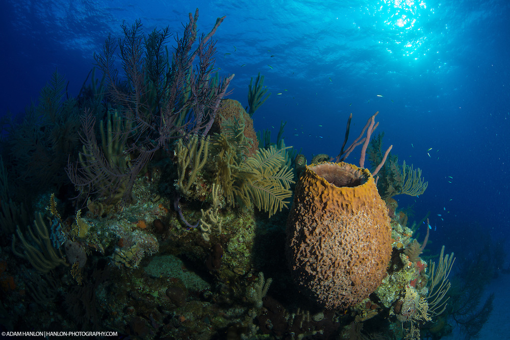 A large barrel sponge provides an interesting feature on this spectacular coral reef. Taken on assignment during the Bahamas Underwater Photo week 2014.