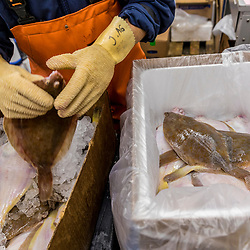 A man packages fresh flounder at Red's Best at the Boston Fish Pier in Boston, Massachusetts.
