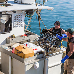 Sternman Jackson Feener (lef) and Captain Erick Harjula. loading bait onto Harjula's lobster boat, 'Redeemed' at the Spruce Head Fisherman's Co-op in South Thomaston, Maine.