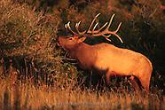 N Bar Elk
