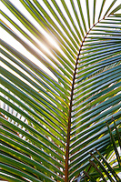 Sunlight shining through palm leaves at Candidasa, Bali, Indonesia