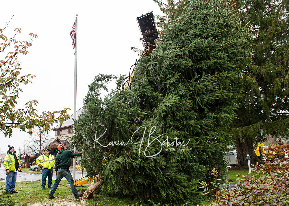 Lucas Lamos with Laconia Public Works guides the 30' balsam fir tree into place Thursday morning at Veterans Square.  (Karen Bobotas/for the Laconia Daily Sun)