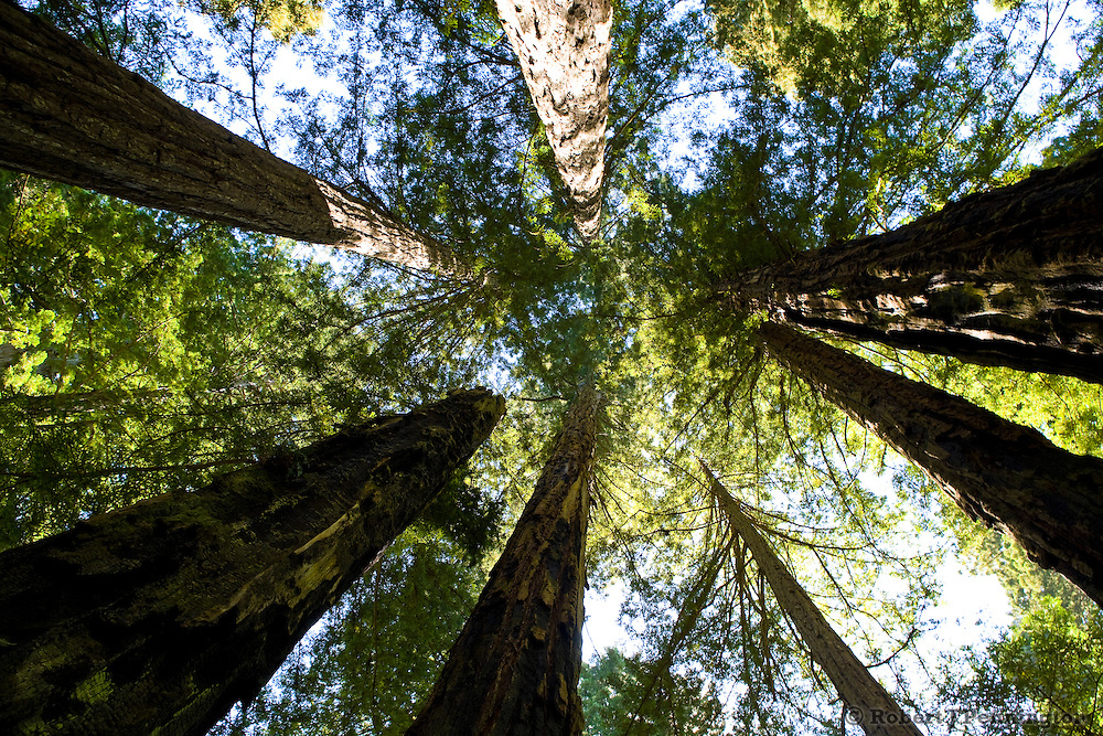Redwood Forests of Northern California.
