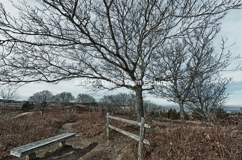 Bench and trees near the shore in Brewster, MA