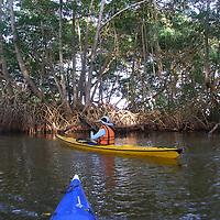 Paseo en Kayak de la organizacion KayakTacarigua en el Parque Nacional Laguna de Tacarigua. Edo. Miranda, Venezuela. Tacarigua, 21 de Mayo del 2012. Jimmy Villalta