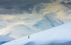 Antarctica #2 2008
