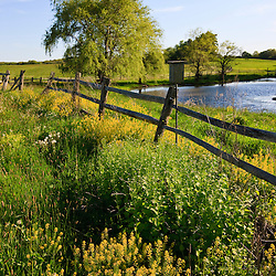 Field flowers, fence, and a farm pond at the Raymond Farm in Ipswich, Massachusetts.