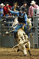 January 29, 2010: PBR Touring Pros at Lucas County Arena in Toledo, Ohio.