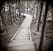 PL07813-00...Minnesota - Holga image of stair way on the Superior Hiking Trail.