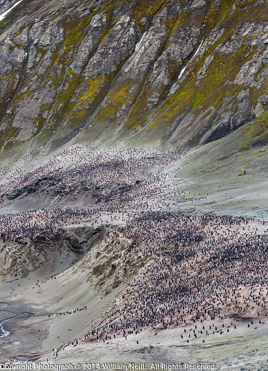 Chinstrap Penguins and cliffs, Baily Head on Deception Island, Antarctica 2014