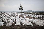 Mugunga refugee camp, Goma, sept 2013
