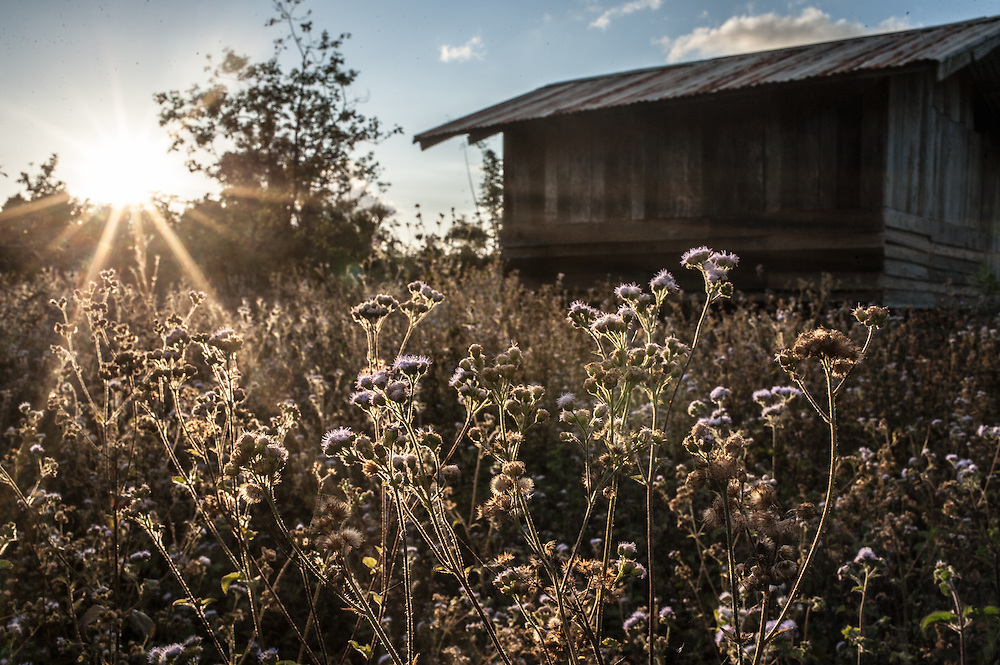 Wildflowers and a shack, Bolaven Plateau, Laos