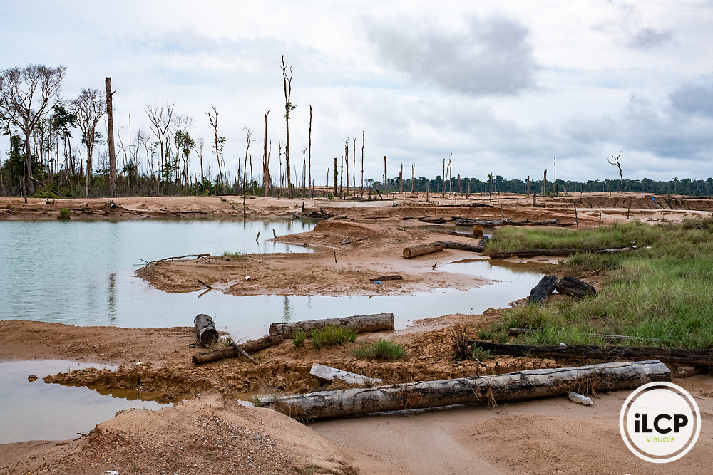 The aftermath of illegal and unofficial alluvial gold mining after miners were forceably removed from the area, showing local pollution and the massive deforestation associated with the process. Following Peru's February 2019 militarized crackdown on illegal and unofficial alluvial gold mining in the La Pampa region of Madre de Dios, Wake Forest University's Puerto Maldonado-based Centro de Innovación Científica Amazonia (CINCIA), a leading research institution for the development of technological innovation for biological conservation and environmental restoration in the Peruvian Amazon, is applying years of scientific research and technical experience related to understanding mercury contamination and managing Amazonian ecosystems. What they learn will help guide urgent remediation, restoration, and reforestation efforts that can also serve as models for how we address the tropic's most dramatically devastated landscapes around the world. La Pampa, Madre de Dios, Peru.