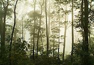 A Fog bank shrouds decidious trees on Caesars Head Cliff, Cleveland, South Carolina