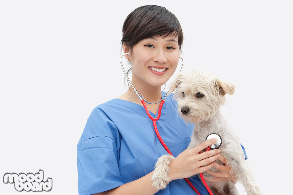Portrait of Asian female veterinarian examining dog over gray background