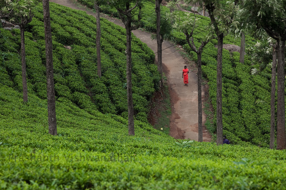A worker walks past  a Tea estate in Conoor, India, on Thursday May 20, 2010. Photographer: Prashanth Vishwanathan/Bloomberg News
