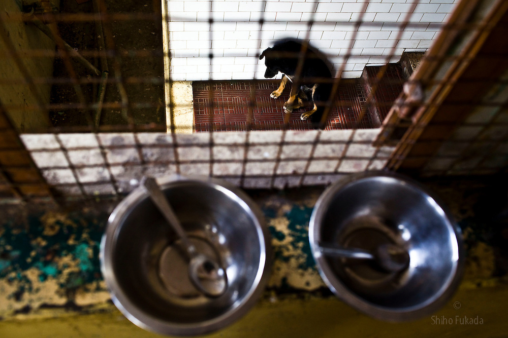 Bowls are seen at Reception Center, a temporary shelter for newly arrived Tibetan refugees in McLeod Ganj, Dharamsala, India, where the Dalai Lama settled after fleeing Tibet in 1959 after a failed uprising against Chinese rule, June 3, 2009.