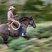 Galloping Cowboy, Absaroka Ranch, Wyoming