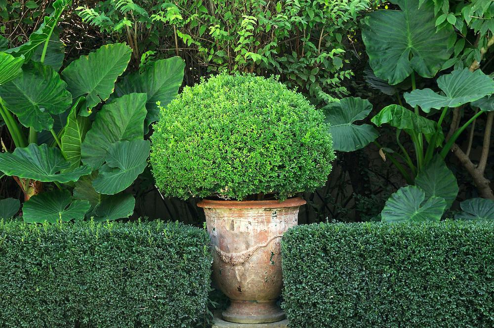 France, Languedoc Roussillon, Gard, Petite camargue, jardin, propriété de Bruno Carles