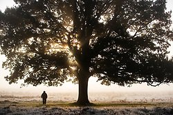 © Licensed to London News Pictures. 09/11/2019. London, UK. Early morning walkers in Bushy Park on a cold frosty morning in south west London. A cold spell is begining to hits parts of the United Kingdom. Photo credit: Peter Macdiarmid/LNP