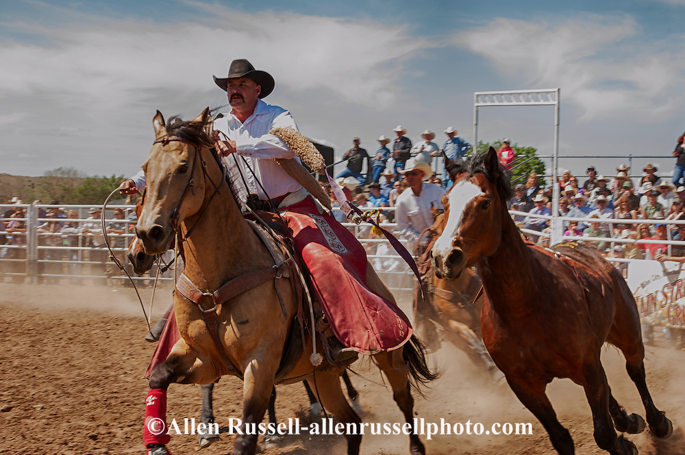 Miles City Bucking Horse Sale, pickup men, Cody Shaw, Jay Shaw, bareback bronc, Montana, MODEL RELEASED, PROPERTY RELEASED on two riders & horses only..