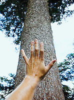 Hand with trunk of huge tree.