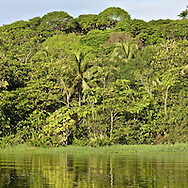 Tortuguero National park has a large variety of biological diversity due to the existence within the reserve of eleven different habitats, including rainforest, mangrove forests, swamps, beaches, and lagoons.