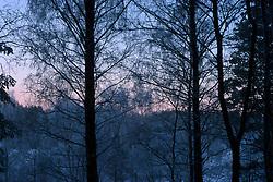 SWEDEN FJALLBACKA JAN04 - Snow-covered tree near Fjallbacka, Sweden.. . jre/Photo by Jiri Rezac. . © Jiri Rezac 2004. . Contact: +44 (0) 7050 110 417. Mobile:  +44 (0) 7801 337 683. Office:  +44 (0) 20 8968 9635. . Email:   jiri@jirirezac.com. Web:    www.jirirezac.com.
