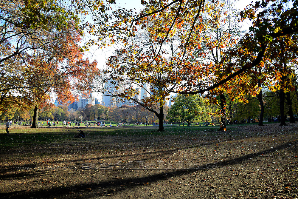 Shadows in Central Park.