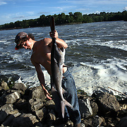 A large paddlefish is pulled from the water by an ambitious young fisherman near the Red Rock Dam last summer.  The paddlefish, or spoonbill is one of the more ancient fish around.  Once endangered, they are now making a comeback.  photo by david peterson