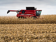 27 OCTOBER 2019 - POLK CITY, IOWA: A farmer harvests corn near Polk City, Iowa. Iowa farmers have been weeks behind schedule through most of the 2019 growing season. A cold, wet spring across most of the state delayed planting by about 2 weeks. A historically wet October has pushed the harvest of soybeans and corn by up 3 weeks. Central Iowa normally gets about 2.6 inches of rain in October, this year central Iowa has received about  7.3 inches of rain. This year has been the wettest year on record in Iowa. Farmers have also been contending with low prices, brought on by trade war between the US and China. The Chinese government put retaliatory tariffs on US agricultural products, including corn, soybeans, and pork, all important Iowa agricultural products.           PHOTO BY JACK KURTZ