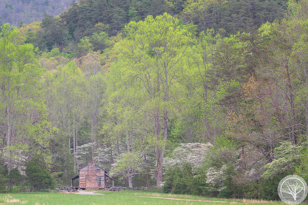 John Oliver Place with spring colors in trees. Cades Cove section of Great Smoky Mountains National Park