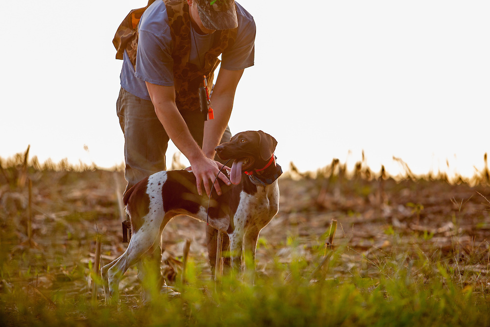 German short haired pointer training