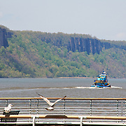 Gulls park on Yonkers pier to keep watch on tugboat as it makes its way up the Hudson River.