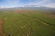 Sugar cane field, Haleakala, Maui, Hawaii