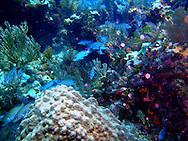 Scuba Diving, Key Largo, FL