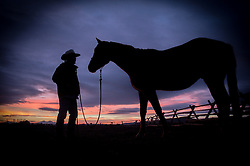 """Bryan Ulring, manager of the J Bar L ranch in the Centennial Valley of southern Montana, spends time with one of his horses after herding cattle on a chilly November day. The J Bar L ranch finish their cattle on grass, in contrast to the vast majority of ranches in the U.S. that send cattle to feedlots. The 2,000 head at J Bar L """"never go into a feedlot,"""" said Bryan Ulring, manager of the ranch. He added that the J Bar L is one of the biggest grass finishers in the state. The Centennial Valley is an important wildlife corridor for elk, moose, antelope, deer, wolverines, grizzly bears, wolves and hundreds of bird species. The valley is largely owned by a handful of large ranches, which means their use of the land impacts the local environment. © Ami Vitale"""