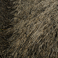 Marsh reeds lie flattened on top of mud in South Carolina.