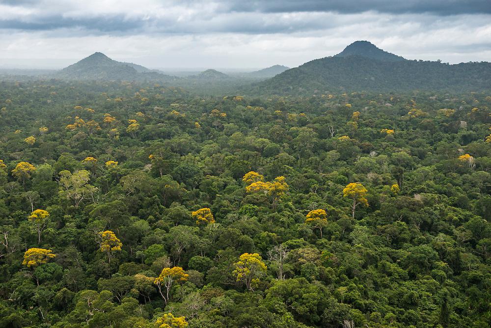 Rainforest Canopy<br /> Region 9<br /> South GUYANA<br /> South America
