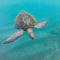 Galapagos Snorkelling