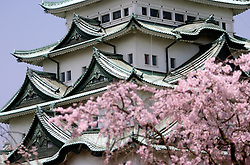 Nagoya Castle and cherry blossom in Japan